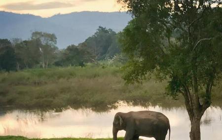 Golden Triangle Asian Elephant Foundation Image