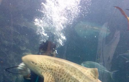 Phuket Aquarium Image