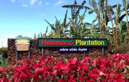 Helemano Plantation Image
