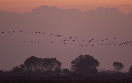 Pixley National Wildlife Refuge Image