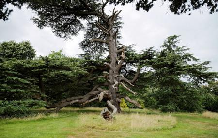 Goodnestone Park Gardens Image