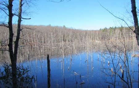 Mass Audubon's Rocky Hill Wildlife Sanctuary Image