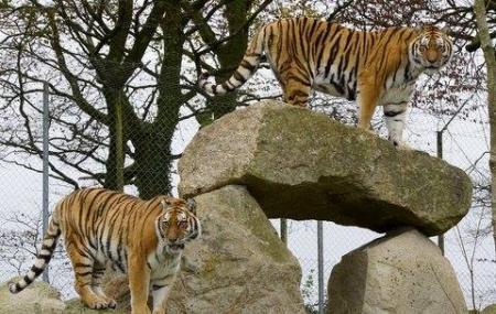Dartmoor Zoo Image