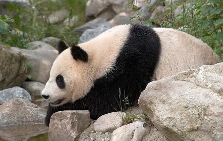 Schonbrunn Zoo Image