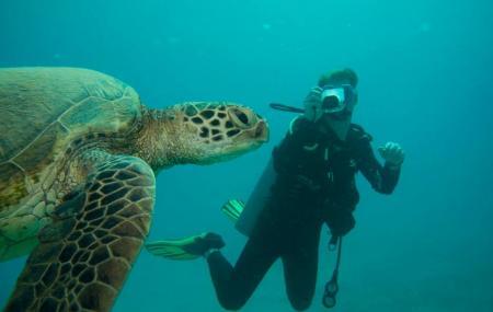 Reef Pirates Diving Llc Image
