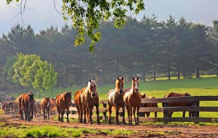 Dillard House Stables Image