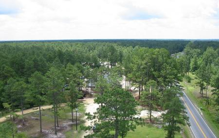 Bladen Lakes State Forest Image
