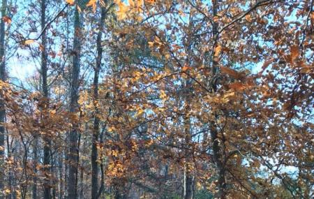 Oconee Forest Park Image