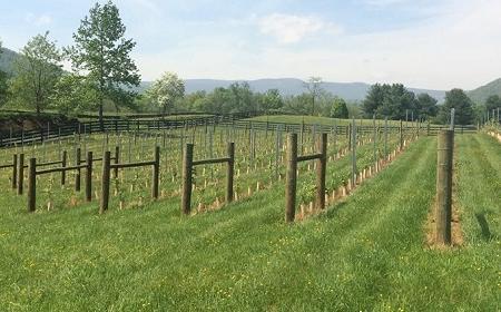 Quievremont Wines, Fairfax