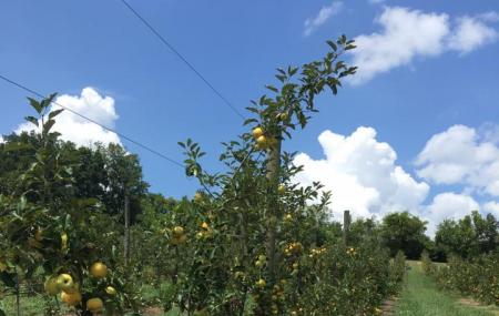 Apple Barn Winery Image