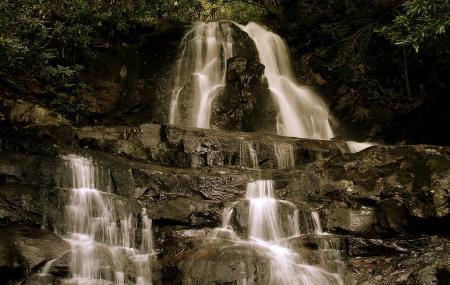 Laurel Falls Trail Image