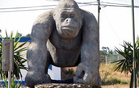 Lagos Zoo Image