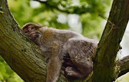 Trentham Monkey Forest Image