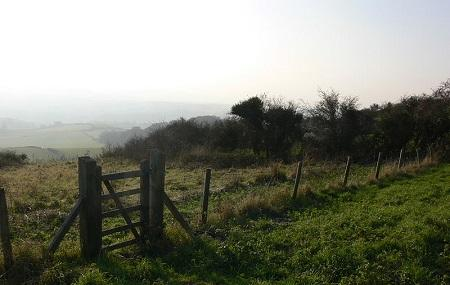 Brading Down Local Nature Reserve Image