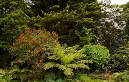 Rapaura Watergardens Image