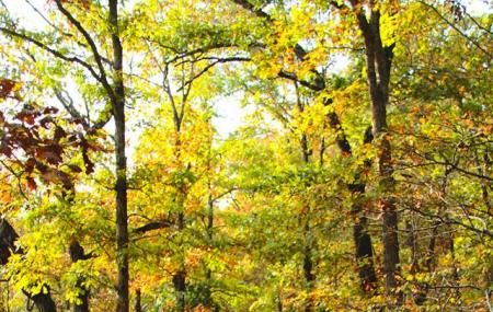 Busiek State Forest And Wildlife Area Image