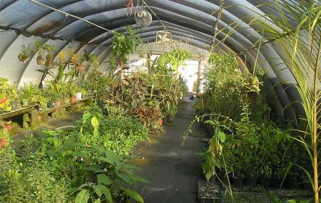 Usf Botanical Gardens Image