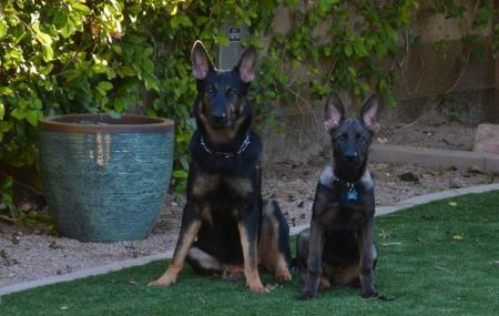 Grand Canyon Kennel Image