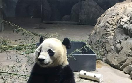 Smithsonian Zoo Panda Plaza Image
