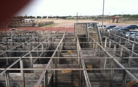 Cowtown Cattlepen Maze Inc Image