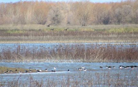 Upper Butte Basin Wildlife Area Image