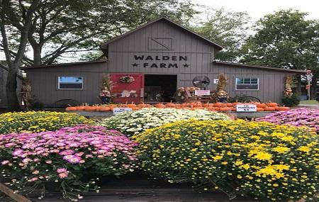 Walden Pumpkin Farm Image
