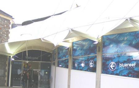 Blue Reef Aquarium Image
