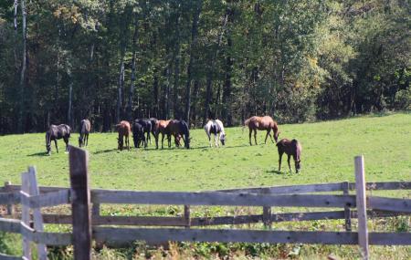 Dunham Sport Horses Image
