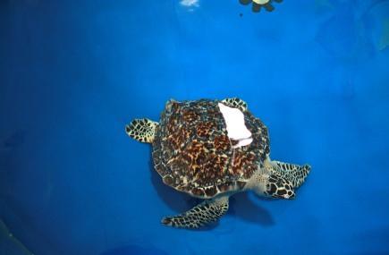 Turtle Hospital Image