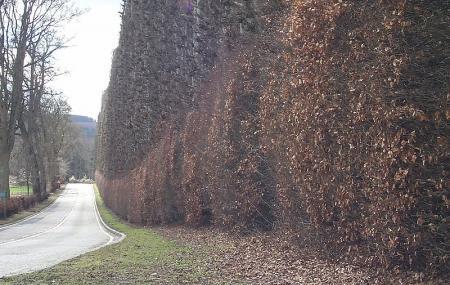 Meikleour Beech Hedges Image
