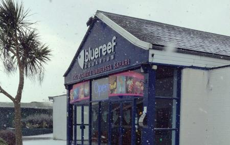 The Blue Reef Aquarium Image