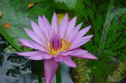 Hawaii Tropical Botanical Garden Image