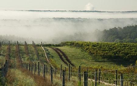 Blenheim Vineyards Image
