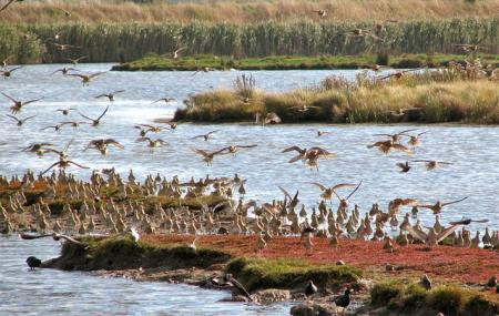 Oare Marshes Nature Reserve Image