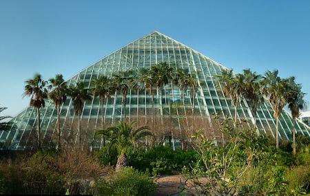 Rainforest Pyramid Image
