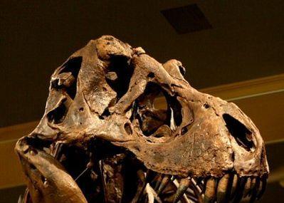 Dinosaur Discovery Museum Image