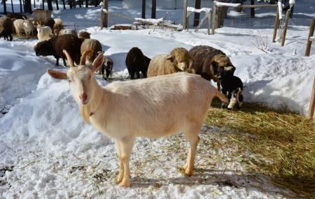 Joybilee Farm Image