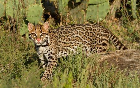 Laguna Atascosa National Wildlife Refuge Visitor Center Image