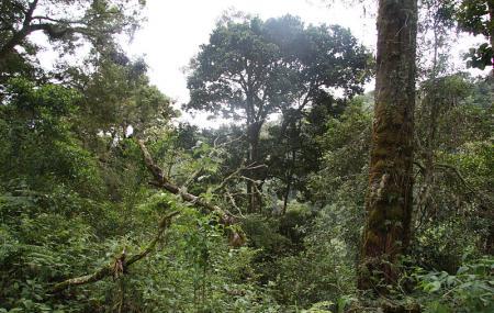 La Amistad International Park Image