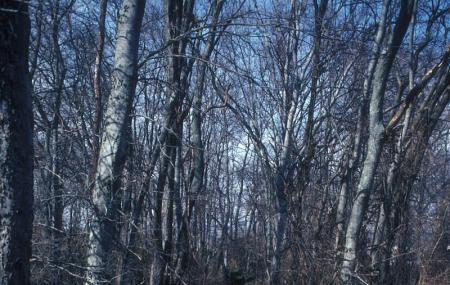 Fort Granger Park Image
