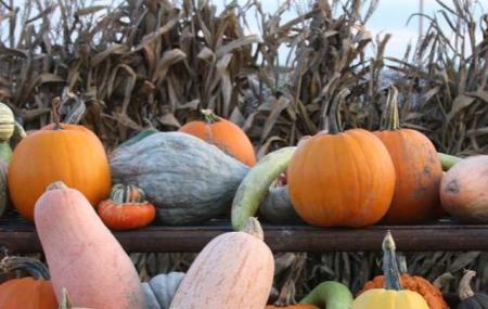 Mcwilliams Pumpkin Patch Image