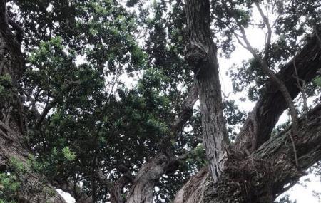 Whakanewha Regional Park Image