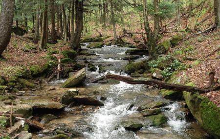 Allegheny National Forest Visitors Bureau Image