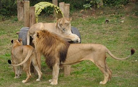 Uganda Wildlife Education Centre Image