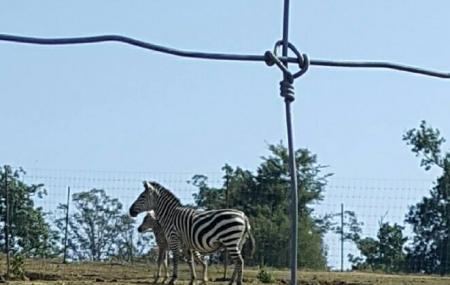 Lazy L Safari Park Image