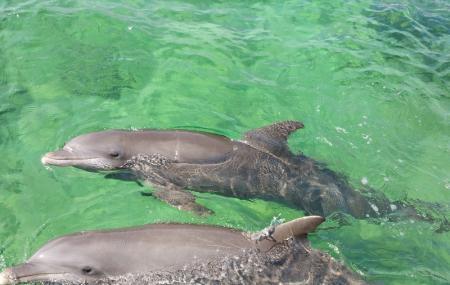 Oceanario Image