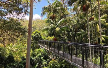 Tamborine Rainforest Skywalk Image