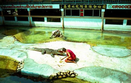 Samut Prakan Crocodile Farm And Zoo Image