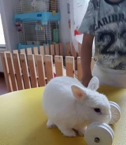Lucky Bunny Cafe Bkk Image