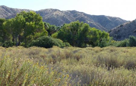 Big Morongo Canyon Preserve Image